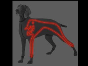 DoggieRaver